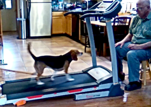 Sweet Pea treadmill